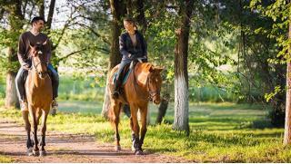 Катание на лошадях! Конная прогулка в лесу или поле для детей от 14 лет и взрослых в конном клубе «Авиньон»! Скидка 46%!