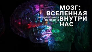 Это что-то новое! Билеты для детей и взрослых на интерактивную выставку «Мозг: вселенная внутри нас» от компании Brainworkgroup!
