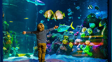 «Морской аквариум на Чистых прудах»: океанариум с 76% скидкой!